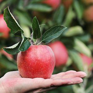 Escolhidas para frutificar