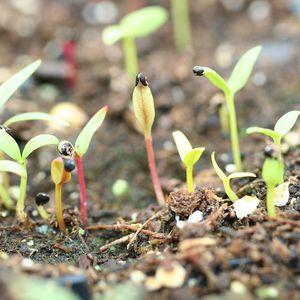 O que você tem plantado?